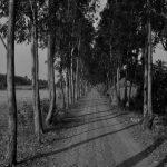 Mousini-Island-roads