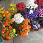 flower-pots-mirik
