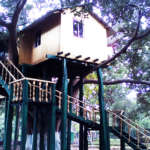 Giant-Squirrel-Camp-Tree-House