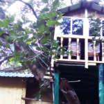 Giant-Squirrel-Camp-Tree-house-orissa