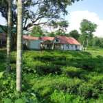 Tea-Garden-Surrounded-Appu-Tea-Estate-Gorumara-Resort