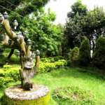 Dhardo-Retreat-Kalimpong-Hotels-and-Resort-Garden-Area