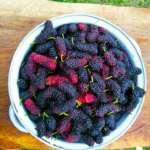 Berrires in Bijanbari Farmstay