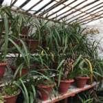 Pumsi Homestay plants