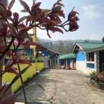 Wild Orchid at Rinchenpong Villa Homestay
