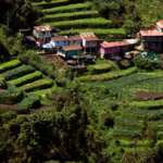 Happy valley tea garden from Darjeeling Villa
